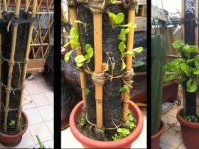小型空间园艺DIY垂直播种机